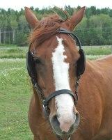 horsewithblinders