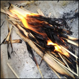 burning-palms